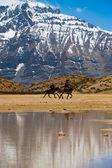 Buddhističtí poutníci koně jezero horské dhankar — Stock fotografie