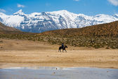 Koni poutní hory svaté jezero dhankar — Stock fotografie