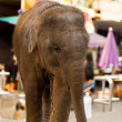 Stock Photo: Young Baby Elephant Downtown City Bangkok