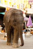 Young Baby Elephant Downtown City Bangkok — Stock Photo