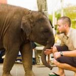Baby Elephant Pushing Tourist Downtown Bangkok — Stock Photo