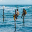 Stilt Fishermen Sri Lanka Traditional Fish Caught - Stock Photo