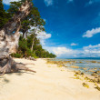Stock Photo: Pristine Undeveloped Sand Beach Forest Low Tide