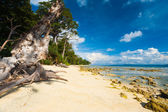 Pristine Undeveloped Sand Beach Forest Low Tide — Stock Photo