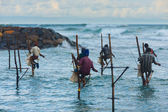 Many Stilt Fishing Sri Lanka Traditional Rock — Stock Photo
