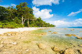 Low Tide Rocks Pristine Untouched Beach Forest — Stock Photo