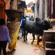 Black Bull Cow Blocking Narrow Alley Varanasi — Stock Photo #23554127