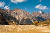 Récolte de blé agriculture tibétaine montagnes — Photo