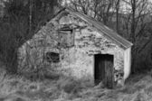 Old Shack in the Forest — Stock Photo