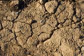 Earth dry texture — Stock Photo