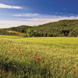 WHEAT MEADOW — Stock Photo
