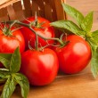 Постер, плакат: Tomatoes Basil and a Basket