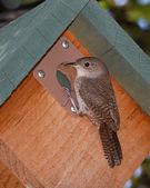Wren Birdhouse — Stock Photo
