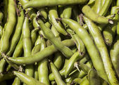 Fresh Fava or broad bean background — Stock Photo