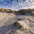 Stock Photo: Dunes at the Danish North Sea coast