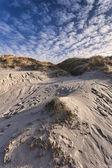 Dunes at the Danish North Sea coast — Stock Photo