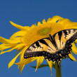Royalty-Free Stock Photo: Sunflower with a butterfly
