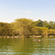 Lake naivasha — Stock Photo