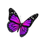 Mariposa volando aislado en blanco — Foto de Stock