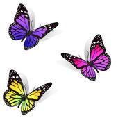Three butterflies — Stock Photo