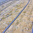 Royalty-Free Stock Photo: Tram tracks