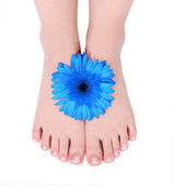 Manicured feet and blue gerber flower isolated on white — Stock Photo
