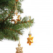 Gold stars on Christmas tree branch, isolated on white background — Stock Photo