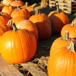 Pumpkins on old wood — Stockfoto