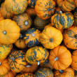 Stock Photo: Heap of tiny spotted pumpkins