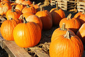 Pumpkins on old wood — Stock Photo