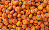 Heap of tiny pumpkins — Stock Photo