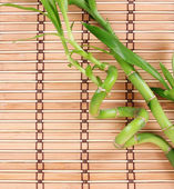 Beautiful green bamboo on bamboo mat — Stock Photo