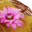 Stock Photo: Engagement ring with hot pink chamomile flower in basket isolated on white, proposing