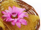 Engagement ring with hot pink chamomile flower in basket isolated on white, proposing — Stock Photo