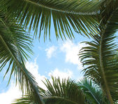 Palm leaves and the sky, frame. Vacation — Stock Photo