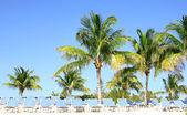 Tropická pláž s palmami a slunečními lehátky. resort na bahamách — Stock fotografie
