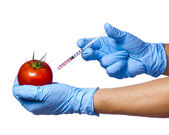 Injection into red apple isolated on white background. Genetically modified fruit and syringe in his hands with blue gloves. GMO food — Stock Photo