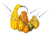 Genetic injections into pumpkins isolated on white background. Genetically modified or unusually shaped squashes with syringes. — Stock Photo