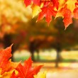 Autumn leaves. Colored Maple leafs. Fall — Stock Photo