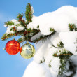 Red and Gold Christmas Balls on Christmas tree branch covered wi — Stock Photo