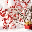 Stock Photo: Gift Box and Christmas Balls under Holly Berries bush Covered wi