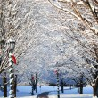 Stock Photo: Winter Alley with Snow Covered Trees and Santa Hat on the Bench.