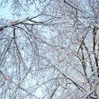 Winter. Frozen branches of tree, covered with Snow. Background — Stock Photo