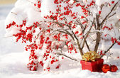 Gift Box and Christmas Balls under Holly Berries bush Covered wi — Stock Photo