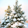 Christmas tree covered with fresh snow. Sunny Winter Day. Outdoo — Stock Photo #37358265