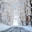 Winter alley with snow covered trees. Rays of the sun fall on fr — Stock Photo #37358295
