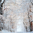 Stock Photo: Winter alley with snow covered trees. Rays of sun fall on fr