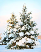 Christmas tree covered with fresh snow. Sunny Winter Day. Outdoo — Stock Photo