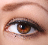 Eye with long eyelashes. beautiful woman brown eye — Stock Photo