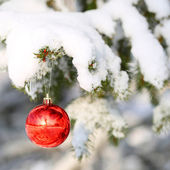 Red Ball on Christmas tree branch, covered with Snow. Outside — Stock Photo